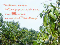 SAVE FOOD SUCCESSES: the Mango Project.
