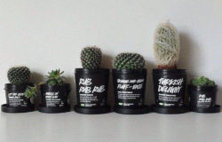 Upcycling idea: how LUSH packaging is made into pretty flower pots quickly and easily. Photo: Lush